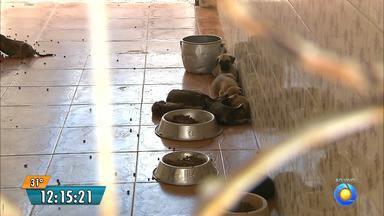 Abrigo de animais é invadido em João Pessoa - Os bandidos mataram um cachorro e roubaram outro.