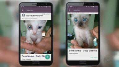 Aplicativos ajudam a encontrar animais desaparecidos ou que precisam ser adotados - Tecnologia é uma mão na roda para os donos de animais de estimação.