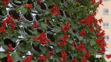Curitiba abre a programação especial de Natal - O calçadão da rua XV de Novembro já está todo decorado.