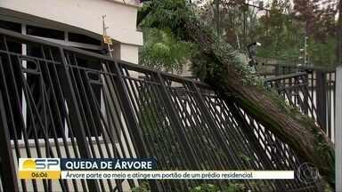 Árvore de grande porte cai sobre portão de prédio na Zona Sul de SP - Via do Jardim Marajoara ficou interditada e energia elétrica foi interrompida