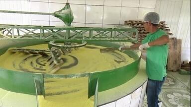 Mecanização ajuda a aumentar a produtividade da mandioca no AC - As agroindústrias têm feito a região sul do estado ganhar força como polo da cultura no país.