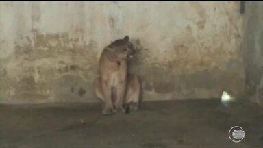Animais apreendidos pela polícia são transferidos para Zoológico em Teresina - Animais apreendidos pela polícia são transferidos para Zoológico em Teresina