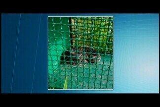 Corpo de Bombeiros captura cobra de 1 metro no Centro de Araxá - Uma jararaca foi encontrada na tarde desta sexta-feira (8). Ela estava sob um veículo que chegava da zona rural da cidade.