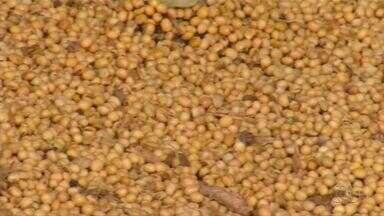 Irregularidades nas chuva atrasa plantio da soja na região Matopiba - Irregularidades nas chuva atrasa plantio da soja na região Matopiba