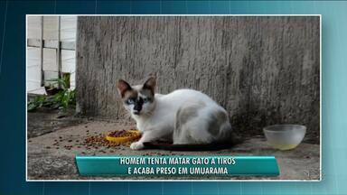 Homem tenta matar gato a tiros e acaba preso em Umuarama - A polícia apreendeu a arma usada no crime. O gato não se feriu.