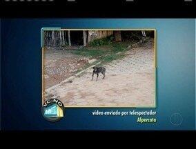 Confira os destaques do VC no MGTV - Moradores de Alpercata enviaram videos denunciando animais de ruas com aspecto de doentes.