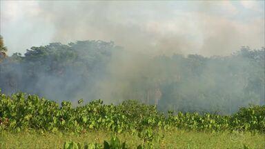 No AP, 300 focos de incêndio em vegetação são registrados entre julho e outubro - Lagoa dos Índios, na Zona Oeste de Macapá, é considerada um dos pontos críticos. Dados são do Corpo de Bombeiros.