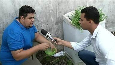 Biólogo dá dicas para moradores se livrarem das lesmas que aparecem no período chuvoso - Biólogo dá dicas para moradores se livrarem das lesmas que aparecem no período chuvoso