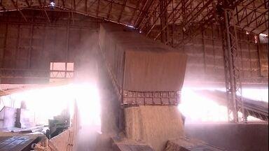 Veja os destaques da semana no campo - O IBGE divulgou mais um levantamento da safra 2017, indicando que a produção deve fechar o ano em quase 242 milhões de toneladas. Para 2018, o instituto projeta uma safra 9% menor - com 219 milhões de toneladas.