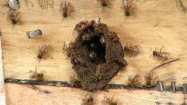 Produção de mel pode ser prejudicada por causa de flores capazes de matar abelhas - Produção de mel pode ser prejudicada por causa de flores capazes de matar abelhas