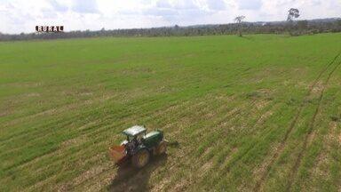 Parte 1: Acre recebe grandes investimentos para comercialização do arroz - Adubo adequado e mecanização tem animado produtores.