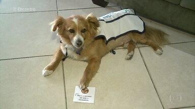 Cãozinho Arthur trabalha em crematório oferecendo conforto às pessoas - O cachorro foi adotado por uma psicóloga, que passou a levá-lo para oferecer mensagens de conforto aos parentes e amigos de pessoas falecidas