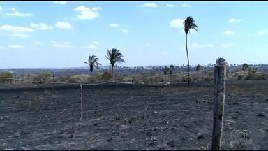 Duas pessoas são indiciadas pelo incêndio que devastou fazendas no norte do TO - Duas pessoas são indiciadas pelo incêndio que devastou fazendas no norte do TO