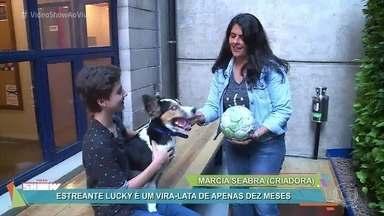 Vitor Figueiredo apresenta seu novo parceiro de cena - Lucky é um vira-lata de apenas 10 meses e apronta todas na pele de Cacau, o cachorrinho de Tomás, de 'O Outro Lado do Paraíso'