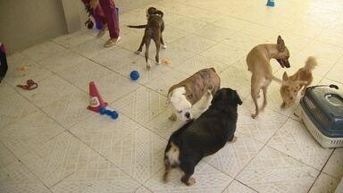 Hotéis para pets são opções para quem pretende viajar nas férias - Animais devem estar com vacinação em dia para serem hospedados.