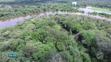 Pesquisas ajudam na proteção da fauna e da flora do Pantanal de MT e MS - Em uma área particular de preservação em Poconé (MT), são desenvolvidas pesquisas que podem ajudar na preservação desse ecossistema que atrai visitantes do mundo todo.