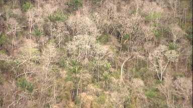 Semiárido brasileiro cresce com inclusão de mais setenta e três municípios - Locais onde existia fartura de água, hoje são cenários de seca.