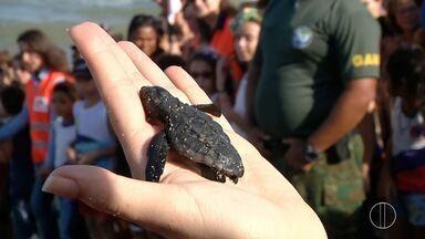 Praia de Atafona, em São João da Barra, tem soltura de tartarugas marinhas neste sábado - Assista a seguir.