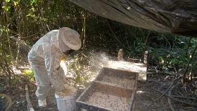 Apicultores alimentam abelhas com mel antes das floradas - O mel está pronto, mas não é pra venda. Ele é colocado perto das colmeias para que as abelhas consumam e fiquem fortes para a época em que elas vão produzir o mel que a gente tanto gosta. No apiário de Felipe Furchim em Votorantim (SP), cada colmeia tem de 40 mil a 70 mil abelhas. No total, são mais de 14 milhões.