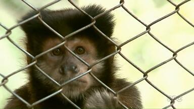 Parque das Aves de Apucarana permanece fechado - Segundo a prefeitura de Apucarana, o Ibama ainda tem que dar o destino aos animais que ainda estão no parque para, só depois disso, reabrir.