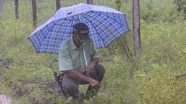 Produtores de hortaliças reclamam de prejuízos por conta das chuvas - As chuvas atrapalham a produção de hortaliças. A saída é trabalhar técnicas de cultivo como coberturas através de estufas.