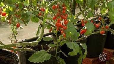 Reveja projeto que testa cultivo de tomates em vasos em Ponta Porã, MS - A reportagem foi um dos destaques de julho de 2017.