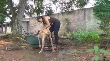 Animais abandonados são recolhidos e preparados para a adoção, em RO - Veja como é feito o trabalho na cidade.