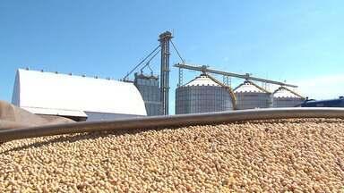 Bahia se destaca em levantamento que identifica os melhores produtores de grãos do país - Estado foi responsável por 3,4% da produção total de grãos do Brasil.