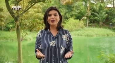 Amazônia Rural mostra produção de soja, carro-chefe no Amapá - Veja primeiro bloco do programa.