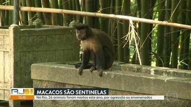 Macacos estão sendo mortos por agressão ou envenenamento - Cerca de 26 animais foram mortos este ano, por agressão ou envenenamento.