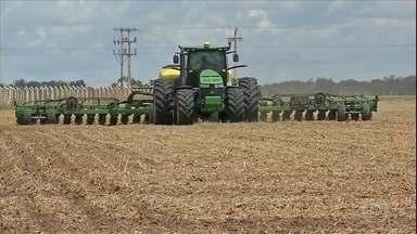Segunda safra de milho começa a ser plantada em Mato Grosso - O milho safrinha vai ocupar uma área menor esse ano. A expectativa do agricultor é que, com redução da oferta, os preços subam.