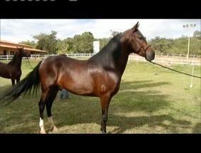 Criação de cavalos se mostra atividade promissora - Reportagem mostra como investimentos de forma correta trazem resultados positivos.