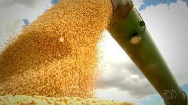 Mercado da soja segue movimentado com preços estáveis - Mercado da soja segue movimentado com preços estáveis