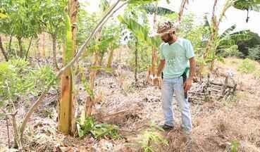 Saiba como funciona o sistema de agricultura sintrópica - Que tal recuperar áreas degradadas e transformá-las em terras produtivas? Saiba como funciona o sistema da agricultura sintrópica, também conhecida como agroflorestamento.