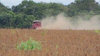 Preço baixo da soja influencia nos negócios dos produtores rurais do Tocantins - Preço baixo da soja influencia nos negócios dos produtores rurais do Tocantins