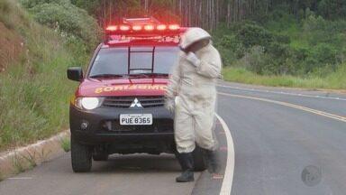 Homem fica em estado grave após capotar carro e ser atacado por abelhas em Passos (MG) - Homem fica em estado grave após capotar carro e ser atacado por abelhas em Passos (MG)