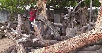 Artesão de Petrolina constroi peças de até três metros de altura - O mestre pintor Joseilson Barbosa utiliza madeira de reaproveitamento no seu trabalho