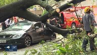 Chuva alaga ruas e causa prejuízos em Belo Horizonte - Na Rua Timbiras, uma árvore caiu sobre carros.