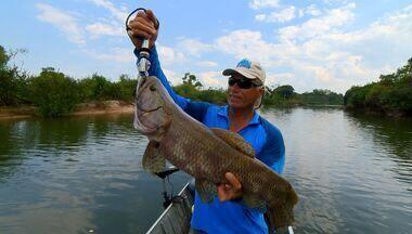 Trairões no rio Xingu - Peixes grandes em companhia dos índios.