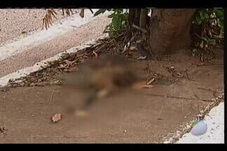Departamento de Zoonoses deve voltar ao local onde macaco foi encontrado morto em Uberaba - Alguns moradores do Jardim Maracanã estão preocupados porque até o fim da tarde desta sexta-feira (2), o animal, já em estado avançado de decomposição, ainda estava em reserva ambiental.
