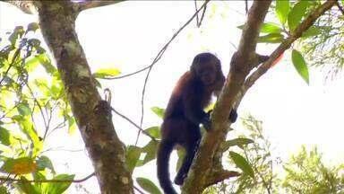 Macaco é encontrado morto no Parque Nacional do Itatiaia, RJ - Primata é o primeiro a ser encontrado com a doença no município. Visitantes devem assinar termo de ciência de risco para entrar no parque a partir deste sábado (3).