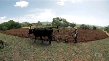 Moradores do sertão nordestino comemoram a volta da chuva - Região enfrentou a maior estiagem da História. Foram 6 anos seguidos de seca.