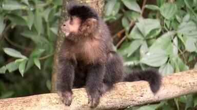 Conheça o Parque Ecológico de Ourinhos - Um encontro com a natureza e aberto ao público