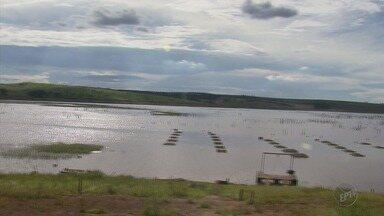 Baixo nível do Lago de Furnas afeta a produção de peixes na represa - Baixo nível do Lago de Furnas afeta a produção de peixes na represa