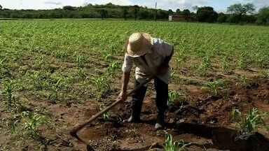 Agricultores têm esperança de boas chuvas durante o feriado de São José - Outras informações no G1.com.br/ce