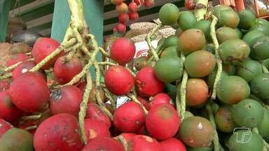 Santarém está na safra da Pupunha, a fruta é uma das mais tradicionais do Pará - Os cachos da saborosa pupunha já começam a aparecer nas feiras da cidade. Apesar da alta procura, consumidores reclamam do preço cobrado.