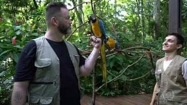Jimmy Ogro visita centro de conservação de aves em Foz do Iguaçu - Dentre as 143 espécies que vivem no local, 28 estão ameaçadas de extinção