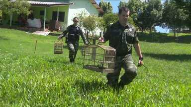 Aves de zoológico de Cascavel são furtadas - Os bandidos levaram 10 aves do local