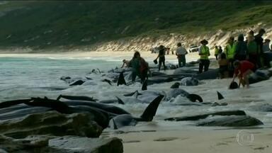 Mais de 150 baleias morrem encalhadas em praia do sul da Austrália - Biólogos tentam salvar 15 baleias-piloto ainda vivas