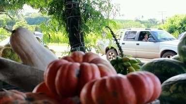 Produtores rurais lucram com barracas às margens de rodovias no Noroeste Paulista - As barriquinhas de beira de estrada são comuns nas estradas que cortam o Noroeste de São Paulo. É uma oportunidade para muitos motoristas fazerem a feira durante a viagem. Já para os produtores é a chance de aumentar a renda.